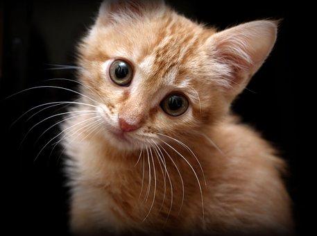 Cat, Kitten, Feline, Loving, Pet, Animal, Animals