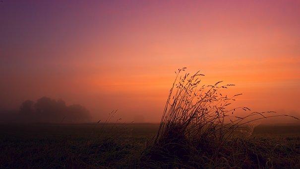 Dawn, Fog, Mood, Grass, Field, Sunrise, Landscape