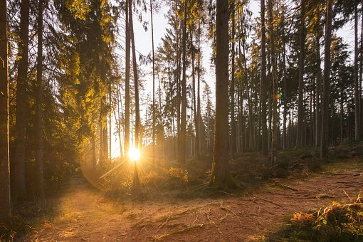 Forest, Forests, Light, Sunlight, Mood, Light Beam