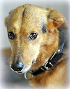 Hybrid, Animal Shelter, Dog, Pet, Animal Welfare