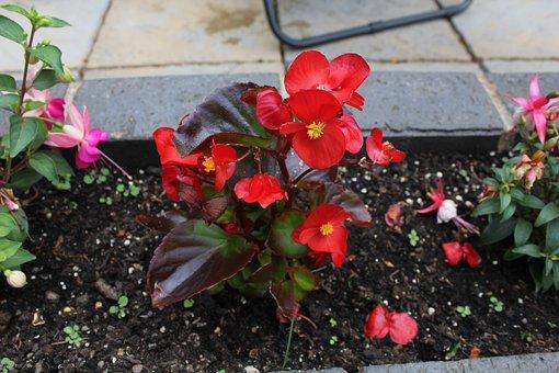 Flower, Red Flower, Plant, Red, Blossom, Petal, Garden