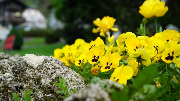Flowers, Plant, Nature, Spring, Sea Of Flowers, Yellow