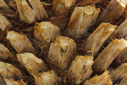 Nature, Food, Close, Background, Wood, Section, Tree