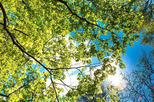 Sky, Branch, Tree, Nature, Summer, Trees, Blue Sky
