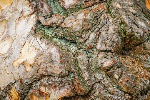Black Pine, Bark, Wooden Structure, Texture, Background