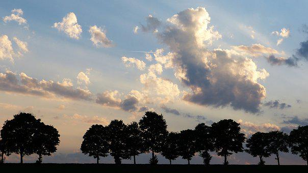 Trees, Avenue, Twilight, Clouds, Sky, Away, Nature