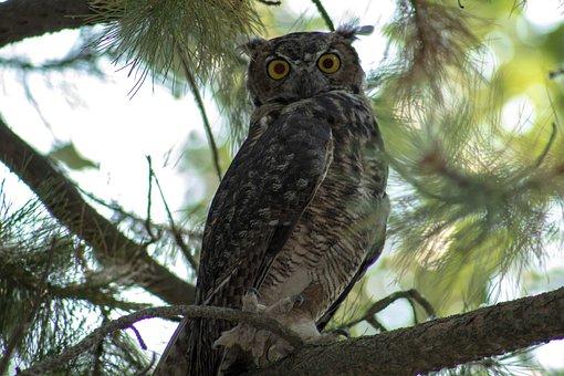 Owl, Nature, Tree, Bird, Animal, Wildlife, Wild, Prey