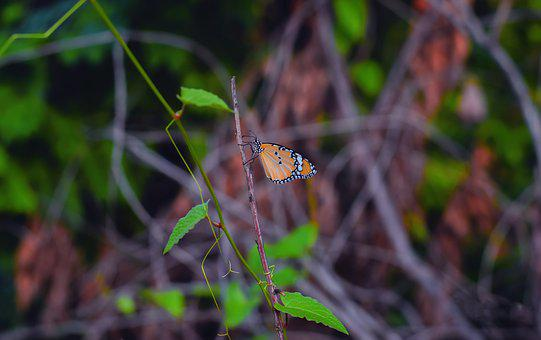 Butterfly, Insect, Nature, Colorful, Summer, Wildlife