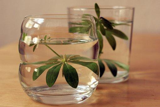 Woodruff, Galium Odoratum, Drink, Coumarin, Glass