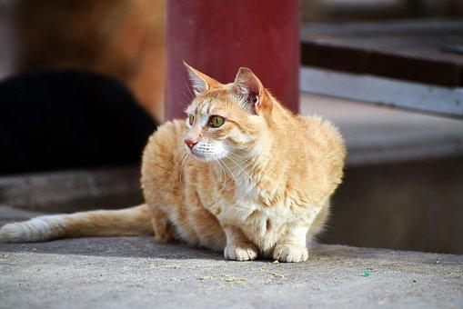 Cute, Animal, Looking, Portrait, Cat, Nature, Mammal
