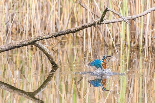 Animal, Background, Beak, Beautiful