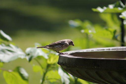 Bird, Bath, Nature, Water, Animal, Wildlife, Outdoors