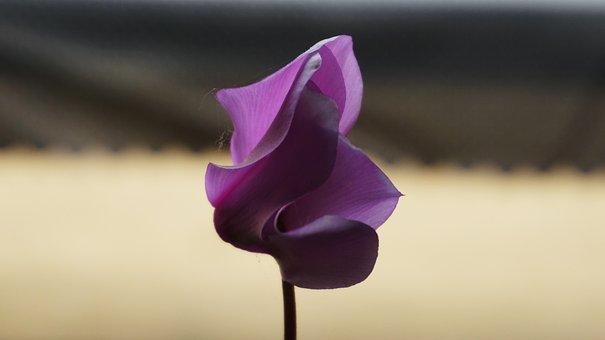 Flowers, Gangneung, Travel, Can Time, Korean Flower