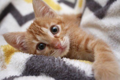 Cat, Kitten, Loving, Feline, Whiskers, Look