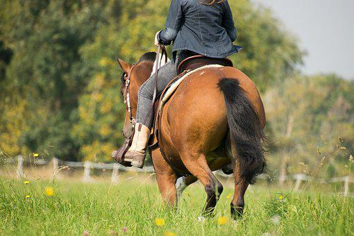 Grass, Mammal, Cavalry, Meadow, Field, In The Free