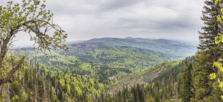 View, Bavarian Forest, Bavaria, Throat, Czech Republic