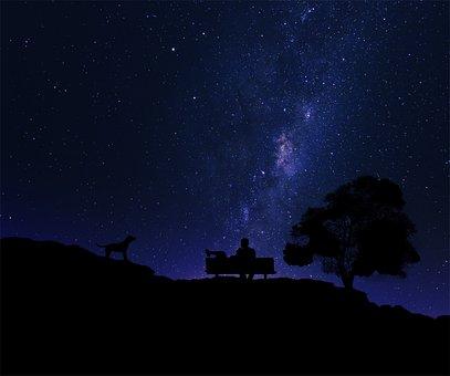 Silhouette, Night, Tree, Dog, Star, Starry Sky