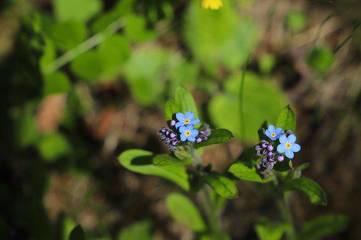 Flower, Plant, Nature, Garden, Summer, Floral