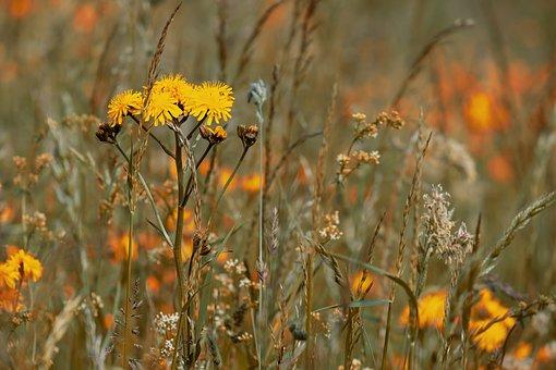 Wild Flower Meadow, Flowers, Bloom, Yellow