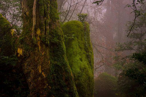 Portugal, Forest, Fog, Moss