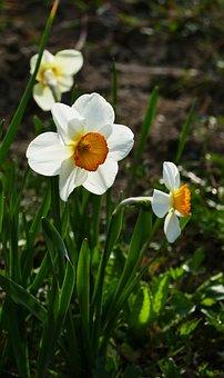 Nature, Garden, Spring, Sun