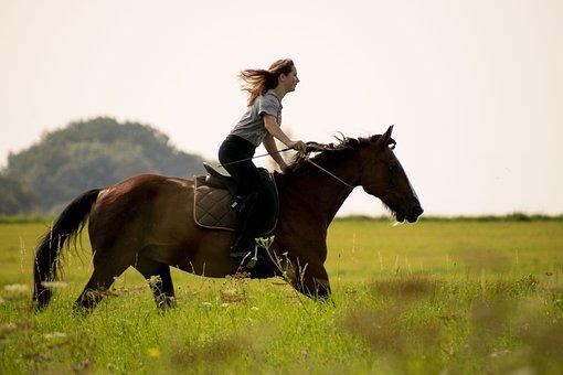 Horse, Reiter, Cavalry, Mammal, Meadow, Grass, Field