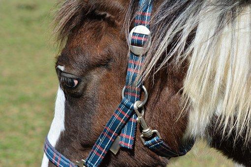 Horse, Horse Head, Mane, Animal, Coupling