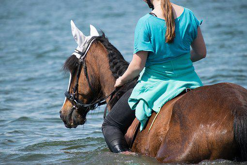Horse, Swim, Water, Lake, Ride, Without A Saddle