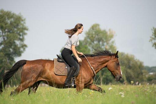 Horse, Cavalry, Grass, Reiter, Mammal, Sitting, Meadow