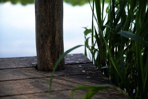 Lake, Max-eyth-lake, Plant, Landscape, Nature, Web