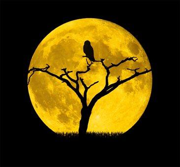 Moon, Owl, Tree, Night, Background, Full Moon