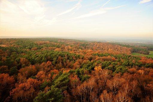 Forest, View, Nature, Reken, Melchen Mountain, Trees
