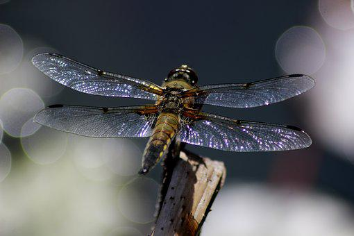 Dragonfly, Pond, Sky, Insect, Nature, Close, Animal