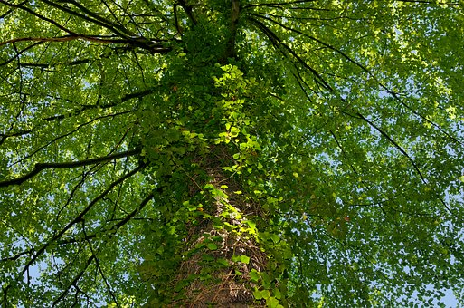 Tree, Leaves, Nature, Summer, Green, Aesthetic