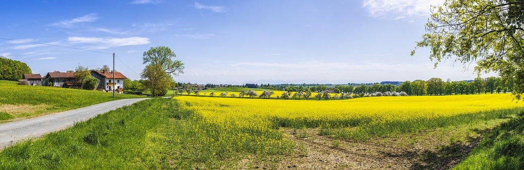 Panorama, Oilseed Rape, Field, Yellow, Nature