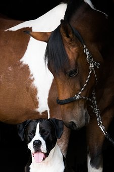 Horse, Pony, Pinto, Friendship, Dog, Portrait