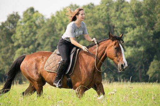 Mammal, Horse, Cavalry, Reiter, Sitting, Grass, Mare