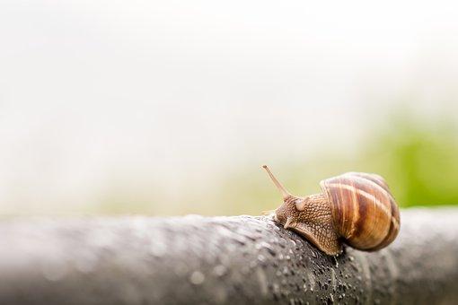 Snail, Rainy Day, Spring, Animal, Slow, Rain, Slug