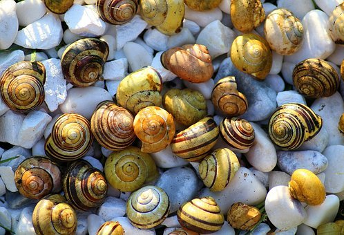 Snails, Crustaceans, The Set, Seashell, Nature, Spring