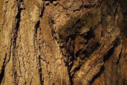 Tree, The Bark, The Bark Of The Tree, Nature