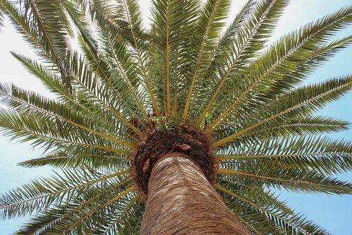 Palm Tree, Blue Sky, Blue, Nature, Tree, Tropical