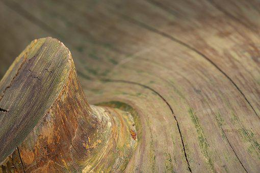 Sequoia, Wood, Tribe, Huge, Wooden Structure, Texture