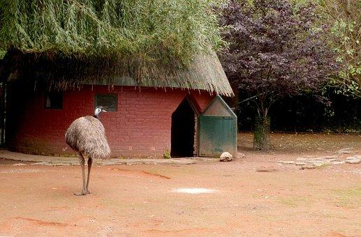Emu, Big Bird, Zoo, House, Habitation, Bird, Animal