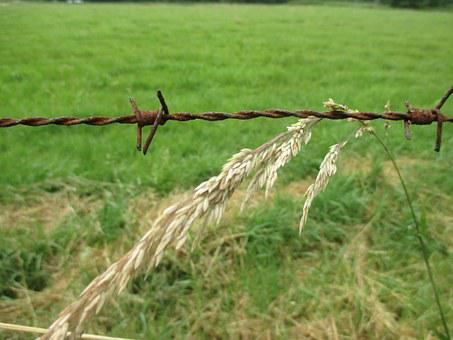 Barbed Wire, Grass, Meadow, Farm, Landscape, Wheat
