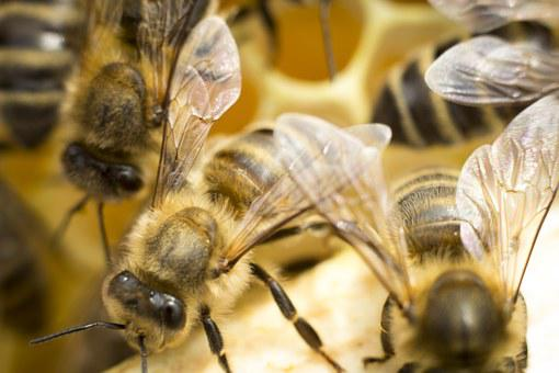 Bee, Ul, Honey, Insect, Bees, Distributional Effects