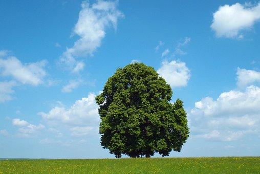 Tree, Nature, Oberschönenfeld, Blue Sky, Summer