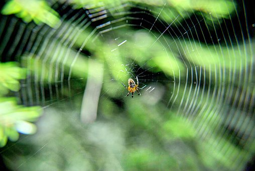 Spider, On, Tangled Web, Arachnid, Nature, Cobweb