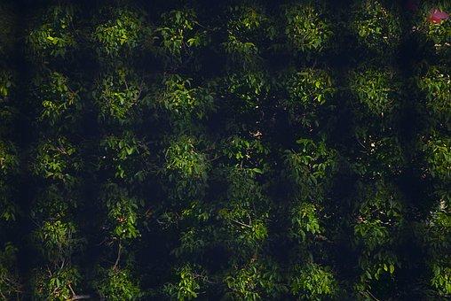 Green, Pattern, Background, Texture, Design