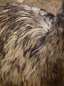 Emu, Plumage, Bird, Feather, Animal, Dromaiidae