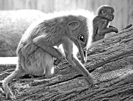 Monkey, Emu, Photo Montage, Mythical Creatures